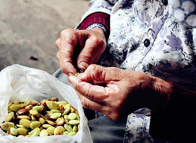 平时用来洗头的,现在100元一斤都是少说的,但农民不愿意种