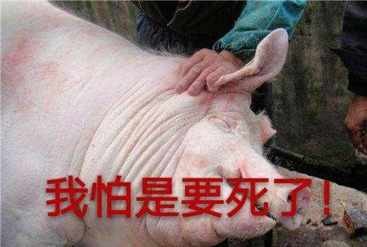 年关将至,主妇们买肉要注意!下面这3种猪肉千万别买!