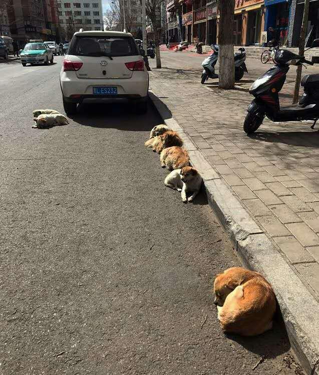 流浪狗躺在马路上一动不动,走进一看,发生了罕见的情境!