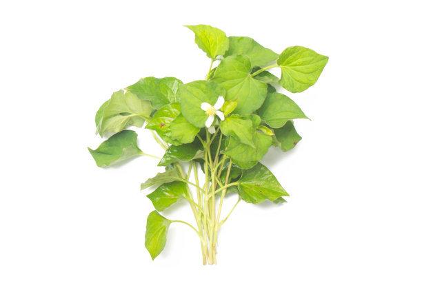 农村人常吃的野菜,带有鱼腥味的鱼腥草,提高免疫力的好草药
