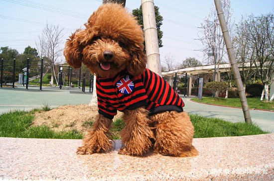 女生最适合养的5种狗,能陪伴还能保护你,遛狗还能提高回头率!