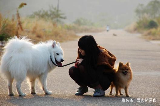 出现这4种情况,狗狗很有可能会咬主人,出现最后一种建议换狗!