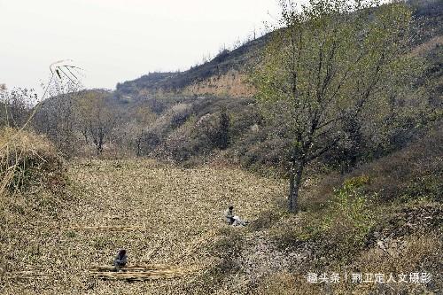 <b>7旬夫妻儿在国外女在上海,为啥有福不享,2毛钱1根农村割芦苇</b>