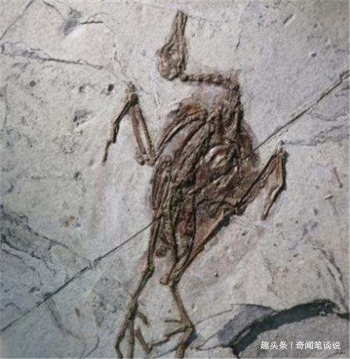 蝙蝠的始祖是谁?考古学家发现1.25亿年前的化石,实在太可怕了