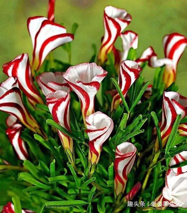 千奇百怪的花,一个都不认识,长见识了