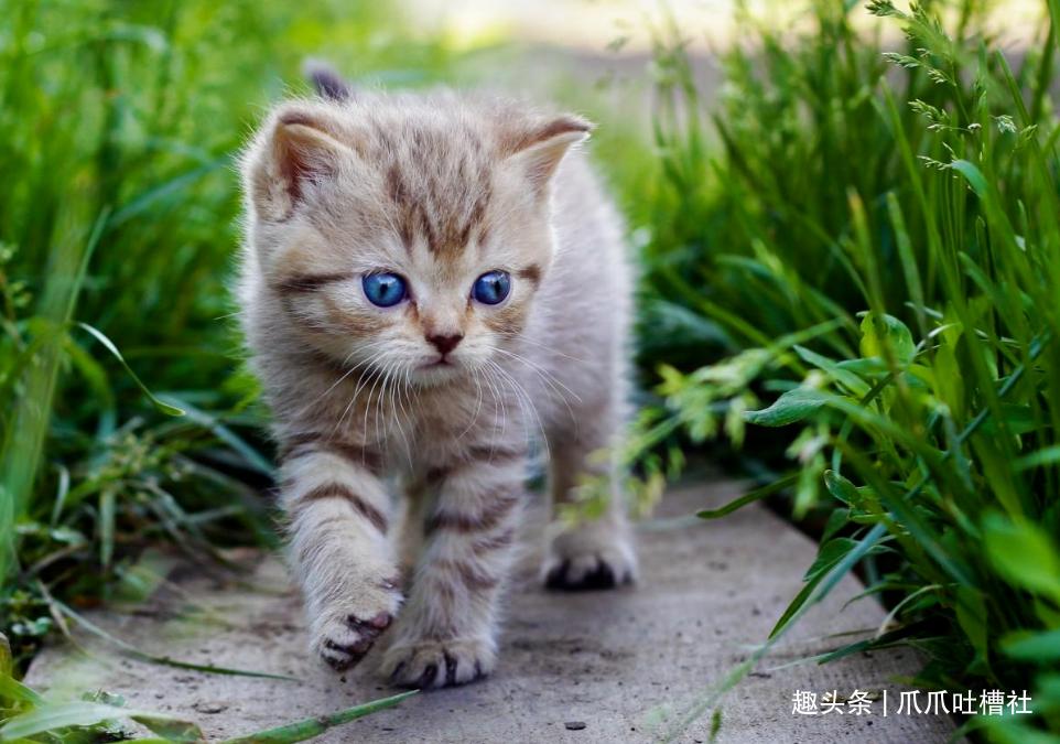你家的貓咪會認主嗎?忽略了這一點,貓咪一定不會認主