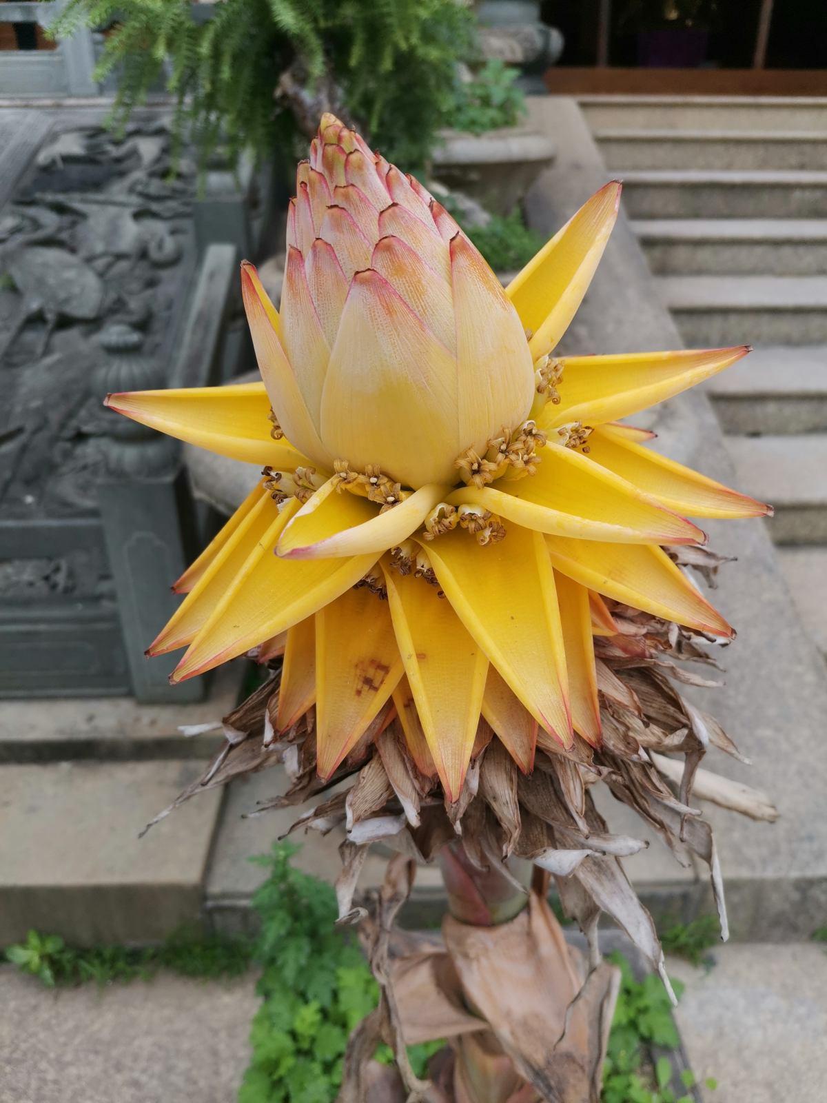 4種霸道花,養一種就霸道十足,觀賞型超強