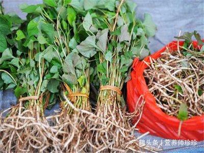 蒲公英、蕨菜、荠菜都靠边站,它才是野菜之王,只是很多人不喜欢