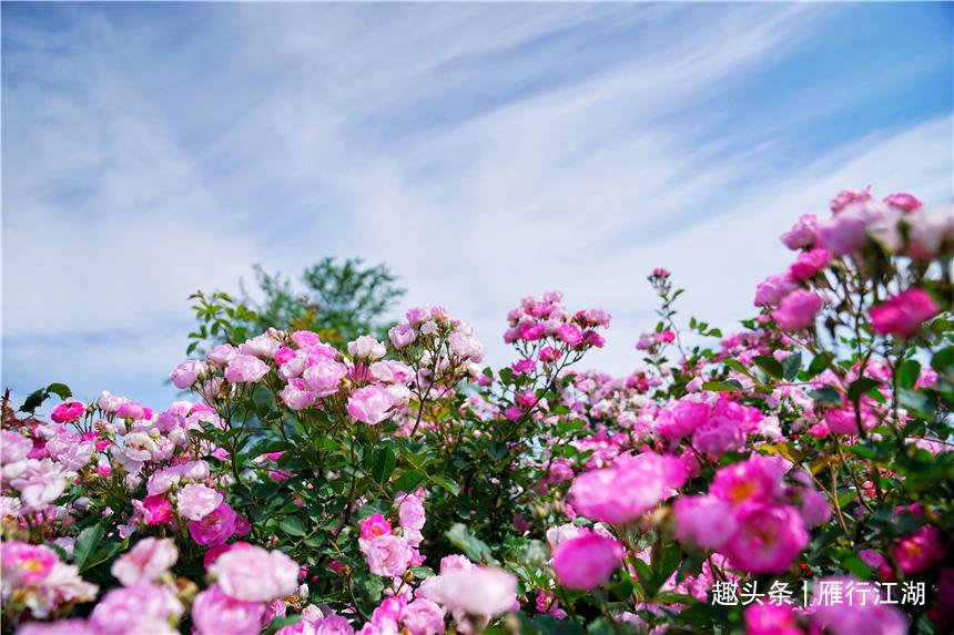 初夏河南,找寻童心,邂逅伏羲山的斜阳,一颗心萌化在云上牧场