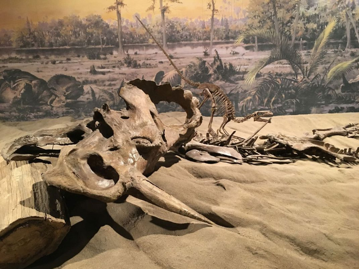 得癌癥,長小角,下軟蛋,恐龍還有多少驚喜是你不知道的?