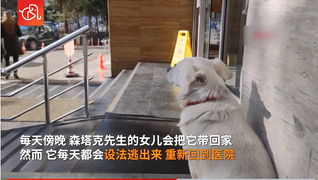 """狗狗在醫院外守候主人6天 網友:現實版""""忠犬八公"""""""