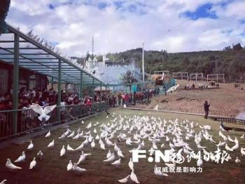 景美活動多 超10萬人次春節游閩清