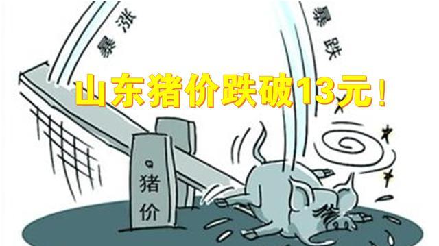 2月日山東省豬價跌破13元,玉米大漲32元,豆粕漲41元