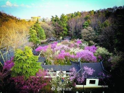 春節假期,S400多萬人次游金陵