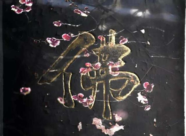 天臺宗祖庭國清寺:首任方丈灌頂大師親手載下的隋梅1400多歲了